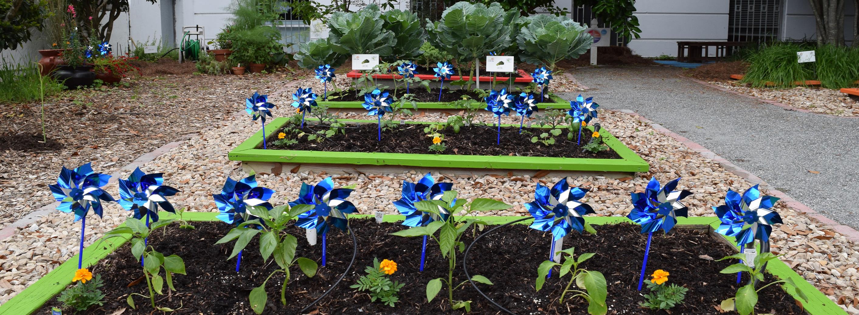 Plant A Pinwheel Garden